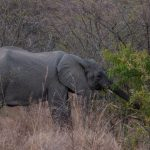 Riserva Mthethomusha - elefante