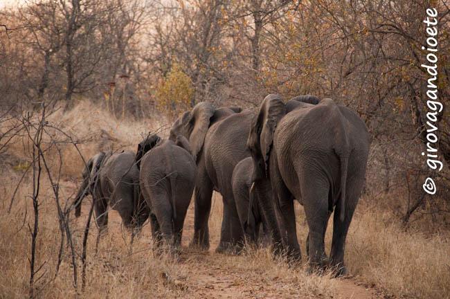 Riserva Mthethomusha - elefanti