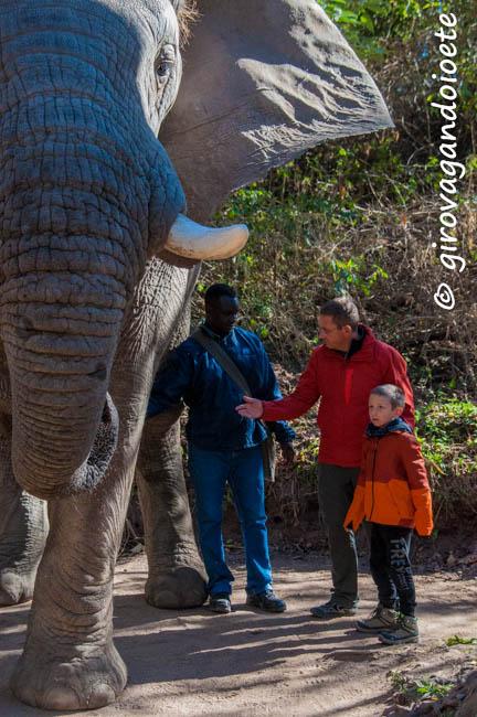 alla scoperta del Mpumalanga - elephant sanctuary