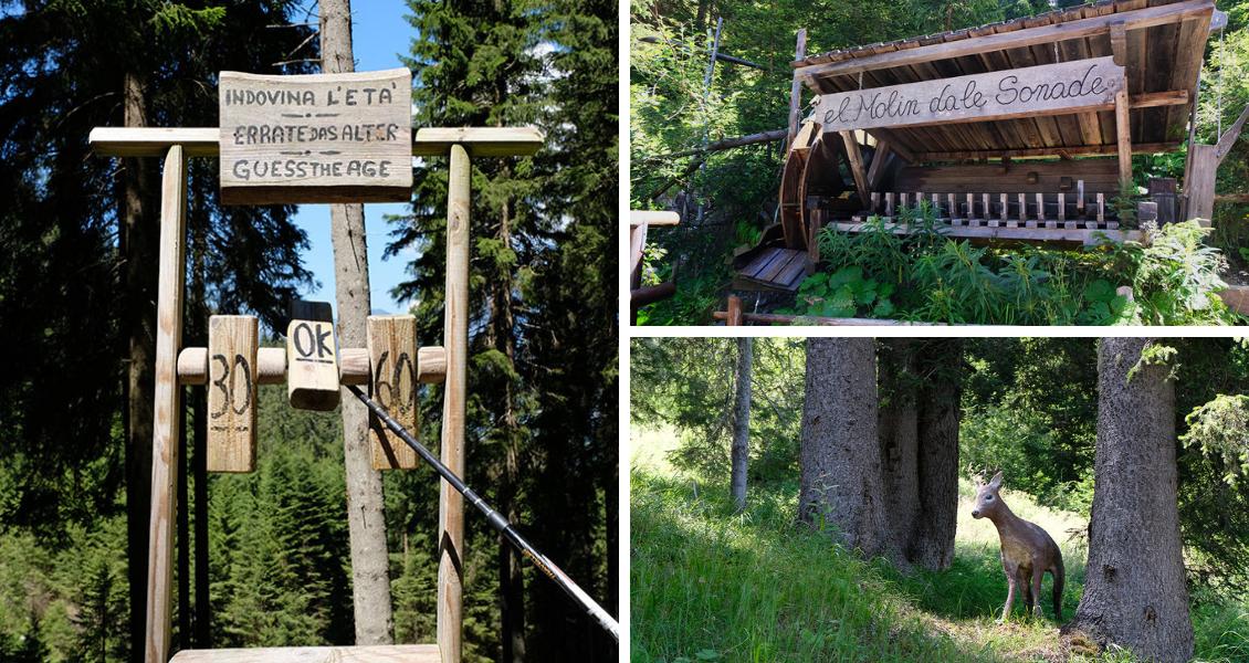 Val di Fiemme - La via del Bosco